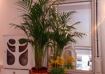 intérieur atelier boutique merveilles végétal et lumière Montpellier